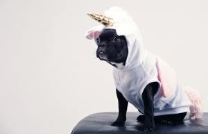 whale;dog wearing unicorn outfit