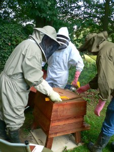 Opening a Hive In Buxted East Sussex in the High Weald