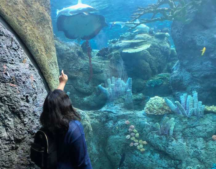 Just keep swimming: Oceanography students visit aquarium