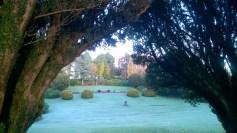 frost-garden