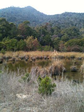 宮島・汽水湖