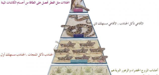عناصر الوسط البيئي السلسلة الغذائية حياتك