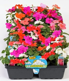1204 Bedding Plants-flat