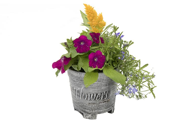 6″ Flower Pot Combo