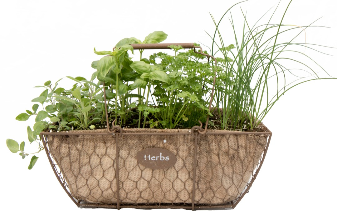 Cottage Herb Planter