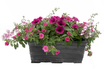 "12"" Combo Patio Pot"