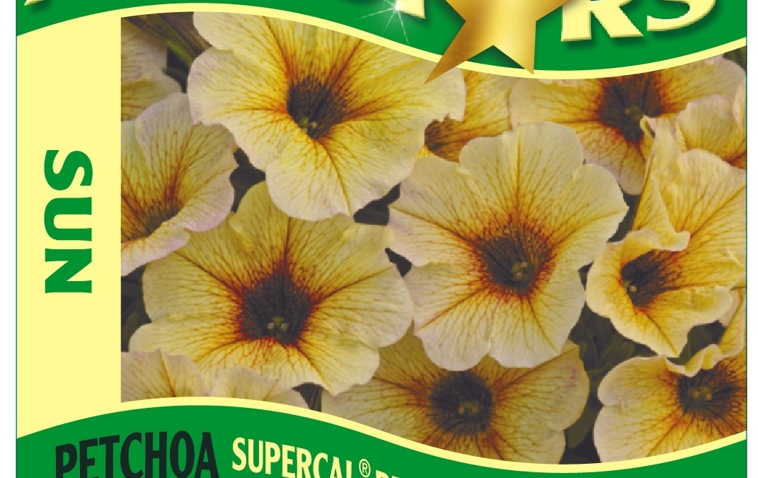 Calibrachoa Petchoa SuperCal