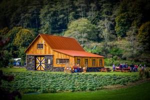 barns at the hydrangea ranch