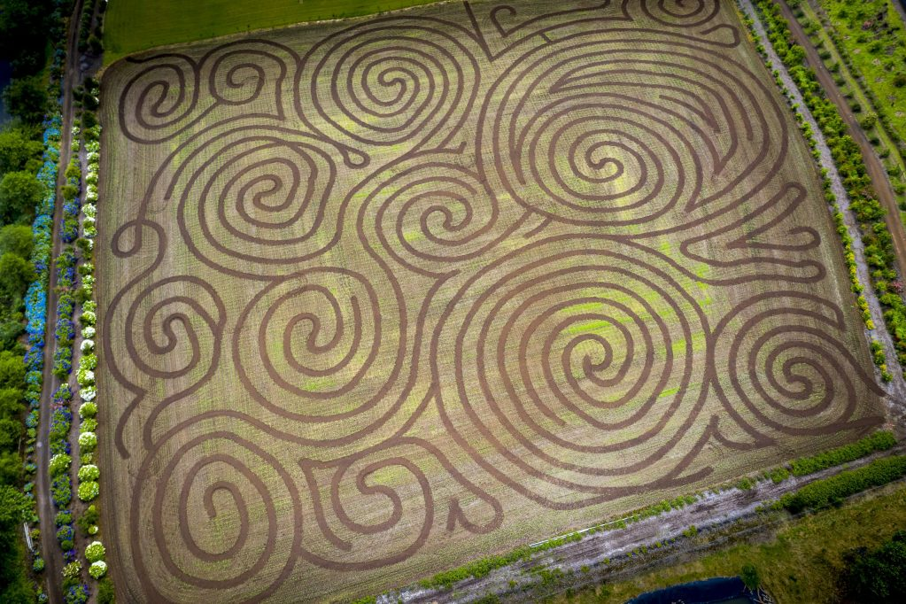 corn mazes in the pacific northwest