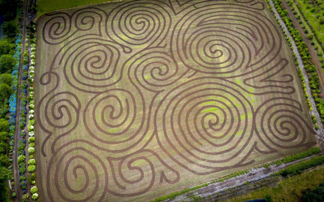 corn mazes in the pacific northwest