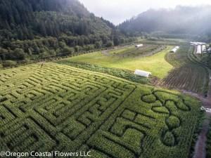 Hydrangea Ranch farm pictures