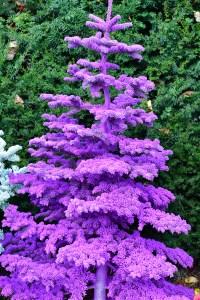 purple flocked christmas trees
