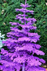 purple flocked christmas trees