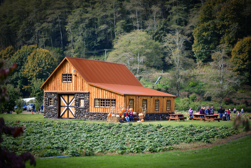 Details of Small Barn Rentals