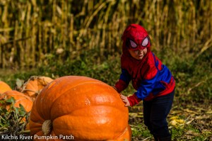pumpkin patches in oregon