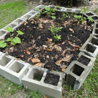 Ugly, But Free, A Raised Bed Garden Made of Cinder (Concrete) Blocks