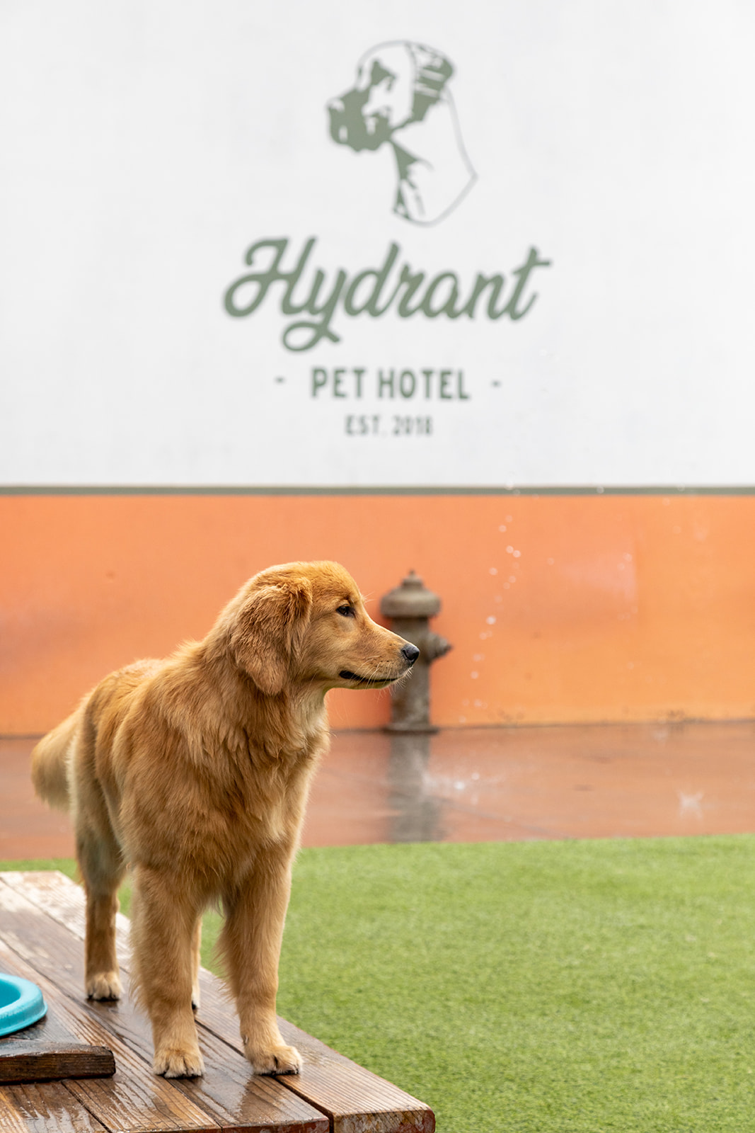 Hydrant Pet Hotel