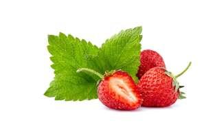grow strawberry in hydroponics garden