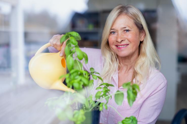 Portrait of senior woman watering plant herbs indoors at home
