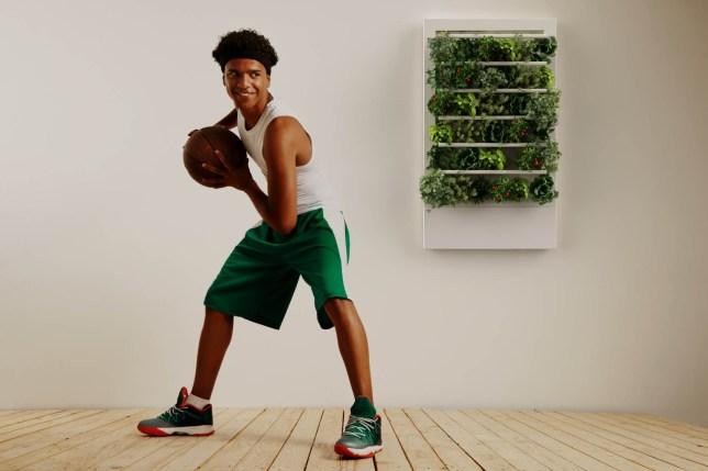 Smart Indoor Garden Basketball