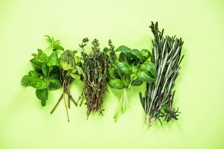 Garden fresh herbs collection