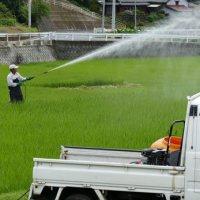稲に水散布