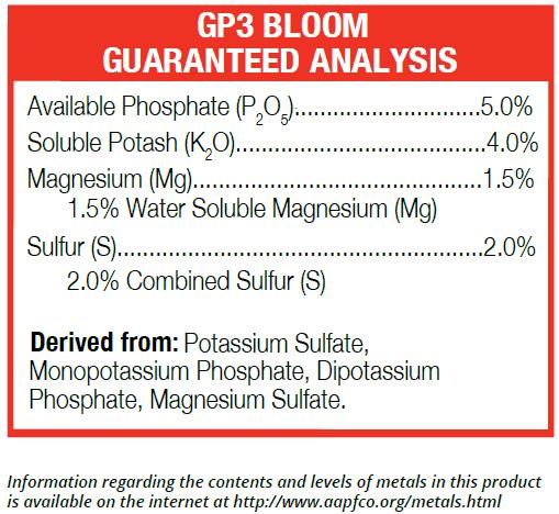 GP3-Bloom Guaranteed Analysis