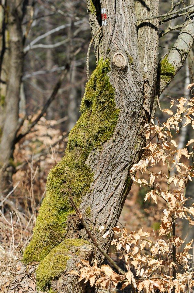 lesní idyla
