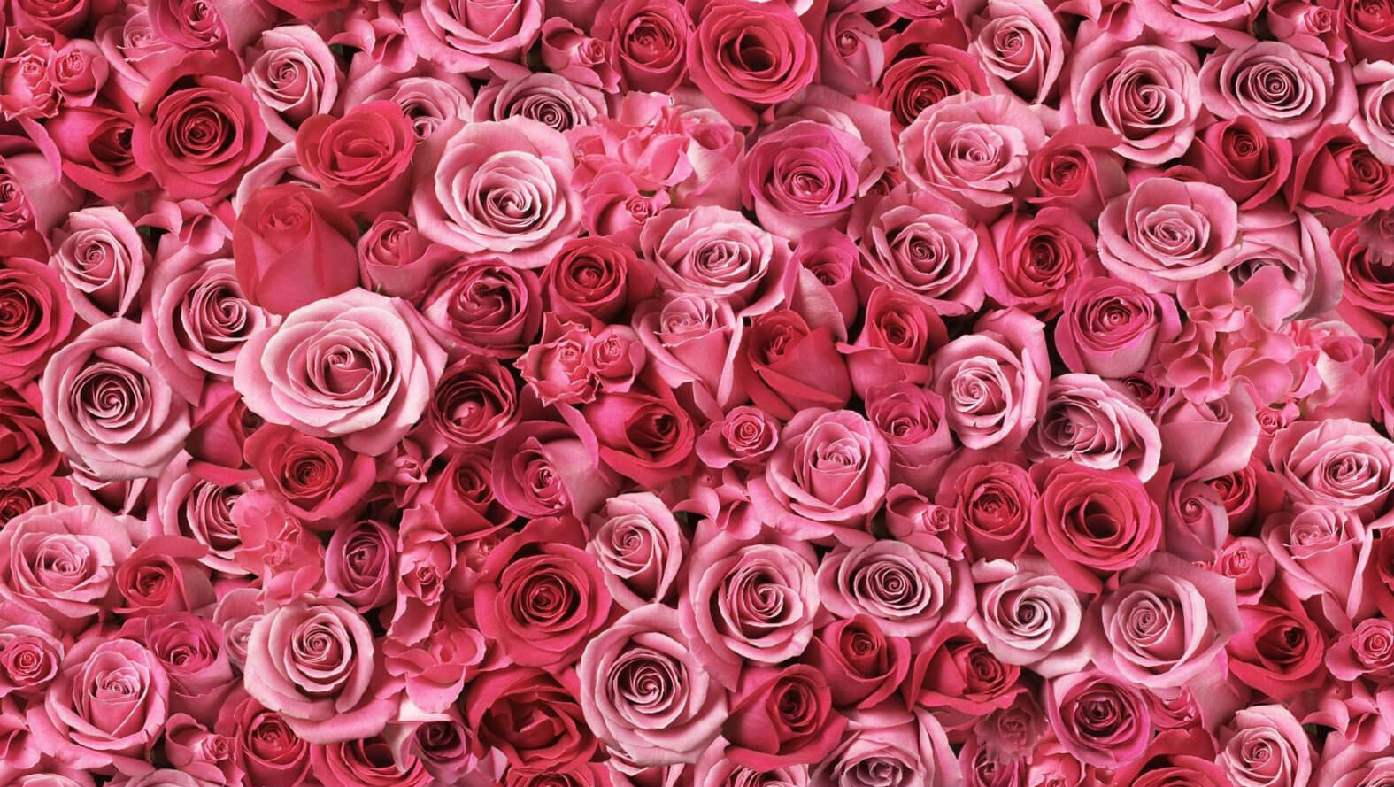 pink-and-roses