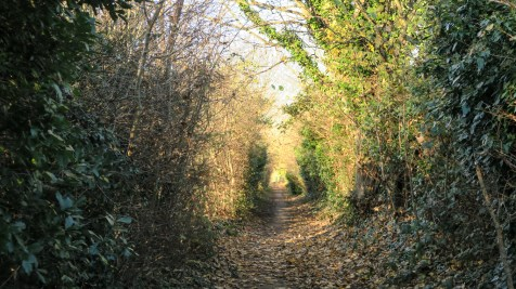 The walk path to Petershams Nursery