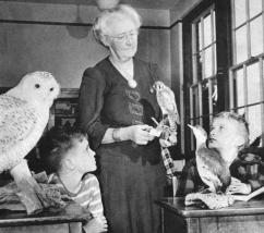 In 1948 a Providence Sunday Journal article pictured Miss Dickens displaying a sparrow hawk to Larry Rose and Lester Littlefield. On the left is a mounted snowy owl, on the right a horned grebe.