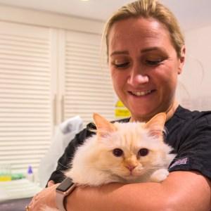 Hyndland street vet - Vet holding a fluffy white cat