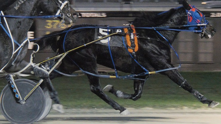 Excelerated Speed winning a race at Pompano Park on November 24, 2013