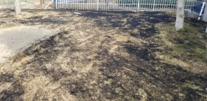 Grass-grilling_20190118_141802 (800x389)