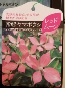 yamabosi_20190304_162848 (473x640)