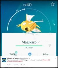 PokemonGO Shiny Magikarp