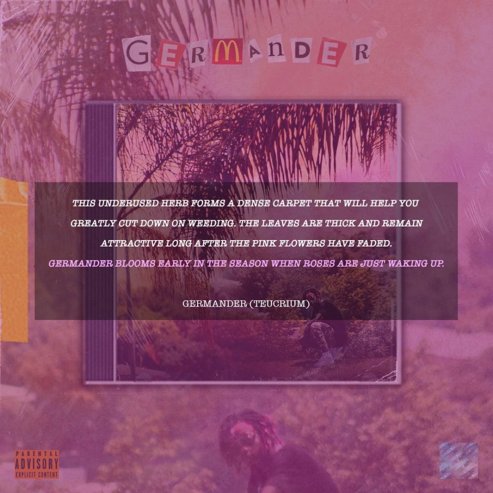 flame Flame Drops New 'GERMANDER' Project [Listen] Dw3 vFZX0AAKp J