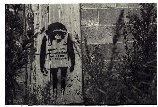 Banksy's monkey in Sydney (via)