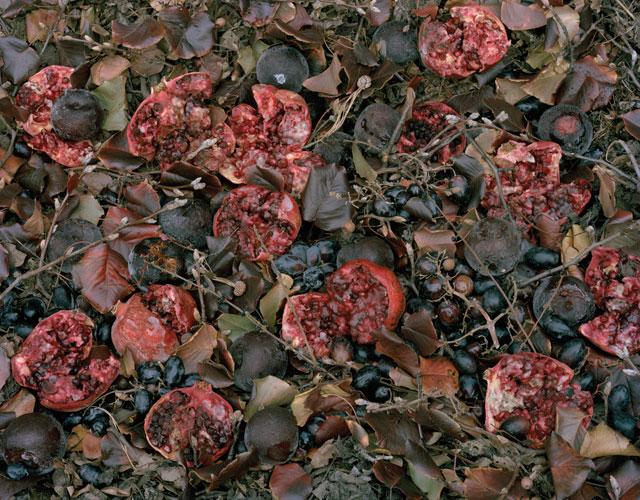 """Tanya Marcuse, """"Fallen Nº 182"""" (2011), pigment print, 29 1/2"""" x 38"""""""