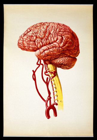 Lithograph of the brain (via Wellcome Library)