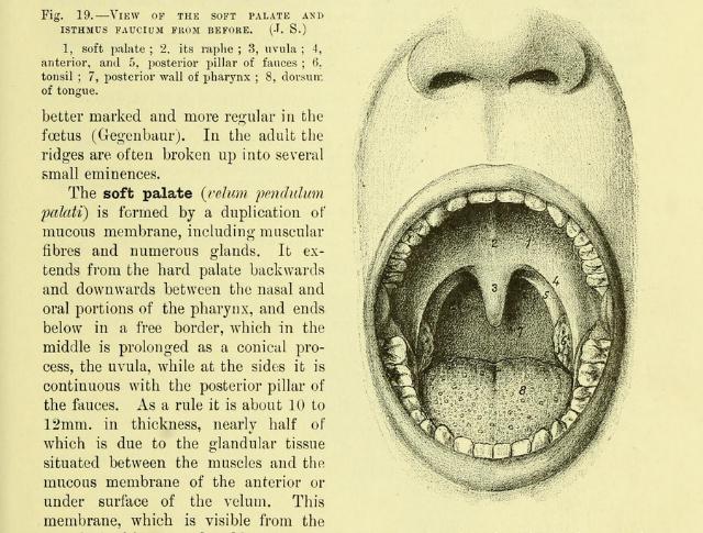 "Illustration from ""Quain's Elements of Anatomy"" by Jones Quain (1890) (via Wellcome Library)"