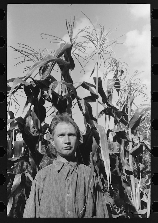 Agricultural day laborer in his the corn field near his tent home in a community camp, Oklahoma City, photograph by Russell Lee (July 1939) (via Photogrammar/Library of Congress)