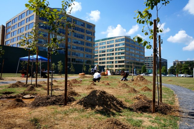 "A view of Peter Hutchinson's ""Thrown Rope DC"" (trees) and Eliza and Nora Naranjo Morse's ""Digging"" in 'Nonuments' park"