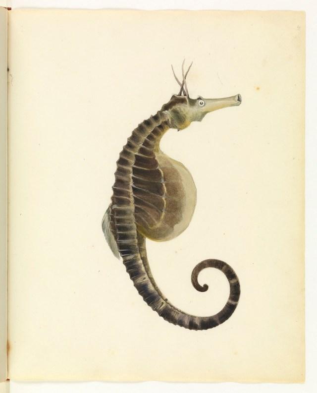 "William Buelow Gould, ""Sea horse"""