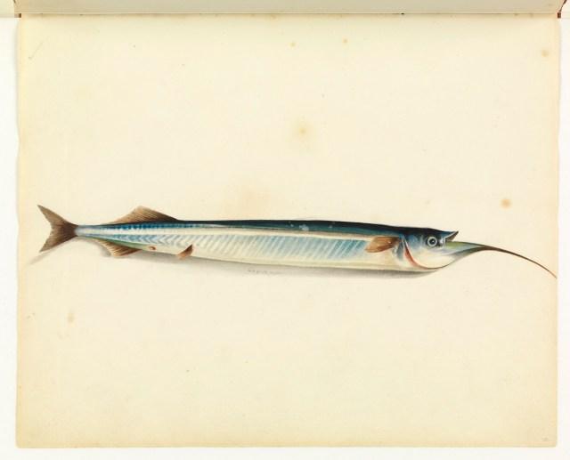 "William Buelow Gould, ""Garfish"""