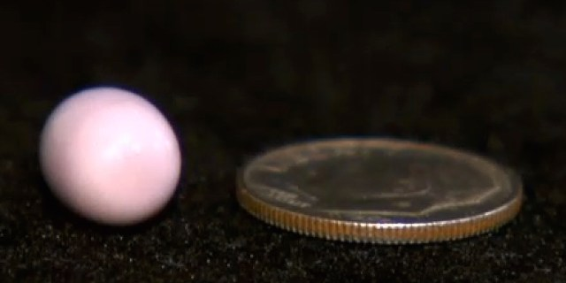 Mike Serino's single lavender quahog pearl alongside a coin (screenshot of CBS Boston video by the author)