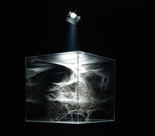 """Tomas Saraceno, """"Hybrid semi-social solitary musical instrument Arp87: built by a couple of Cyrtophora citricola - one month - one Agelena labirintica - two months - one Cyrtophora moluccensis - two weeks - and one Tegenria domestica - 4 months- (turned 4 times 180 degrees on Z axis)"""" (2015) (image courtesy of Tanya Bonakdar Gallery)"""