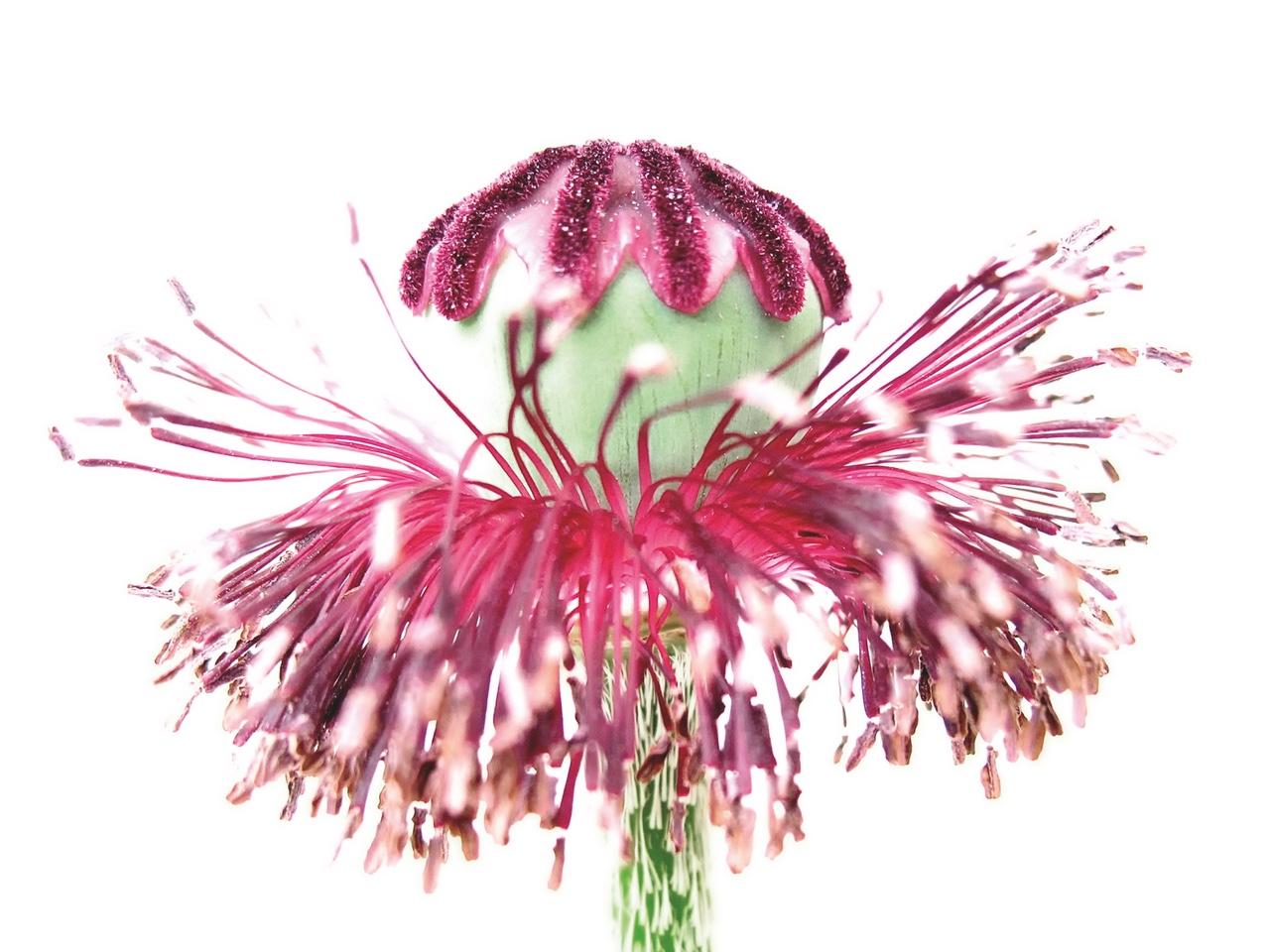 flora art 1