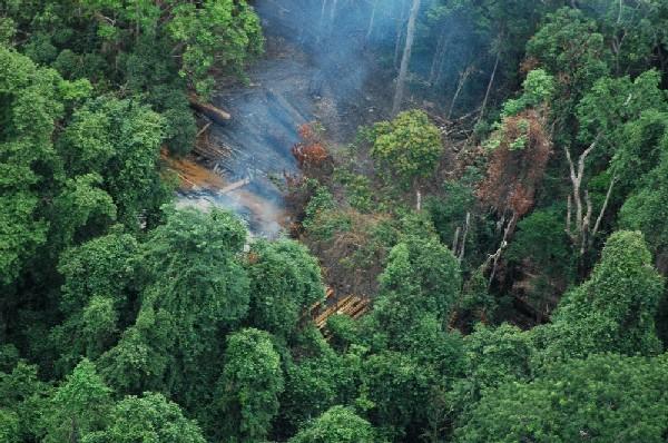 An illegal logging camp in Cambodia's Cardamom Mountains (photo by Paul Mason/USAID Cambodia, via Wikimedia)