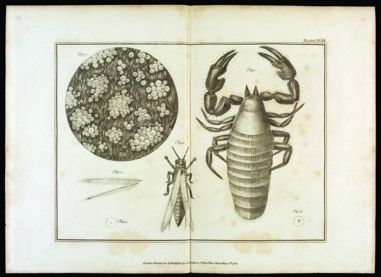 Plate XVIII from Volume 2 of 'Essays on the Microscope' by George Adams, 2nd edition, with additions by Frederick Kanmacher (printed by Dillon and Keating in London, 1798) (courtesy Juliette K. and Leonard S. Rakow Research Library, Corning Museum of Glass)